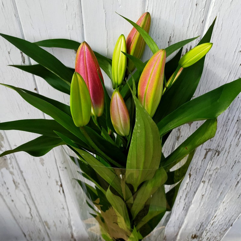 Lily Oriental Bunch of 3 - Pink or White