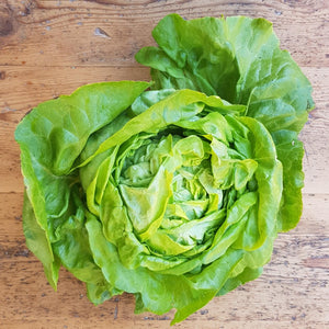 Lettuce - Butterhead UK