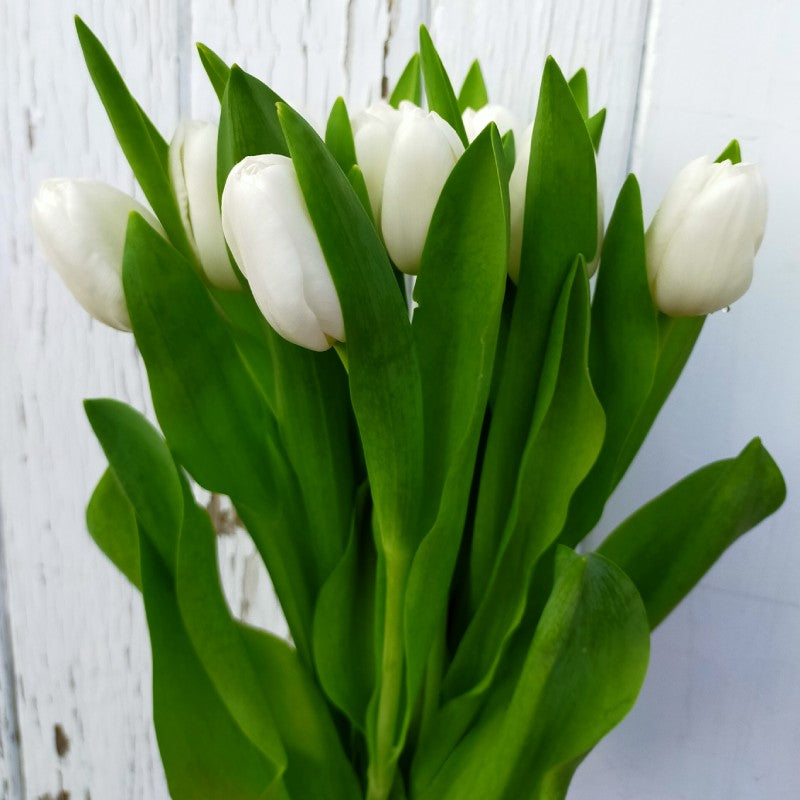 Tulips Bunch of 10 - White, Pink, or Yellow