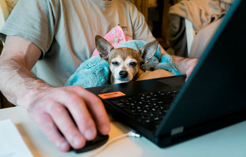 working from home with your dog