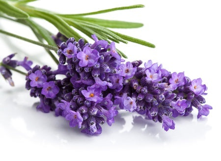 Soothe with the benefits of Lavender gifts.