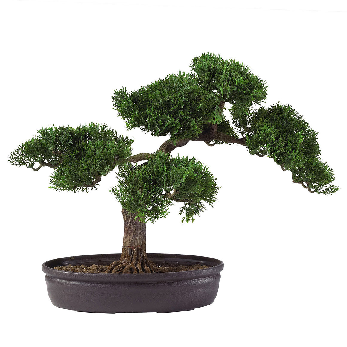 Cedar Bonsai Silk Plant 16""