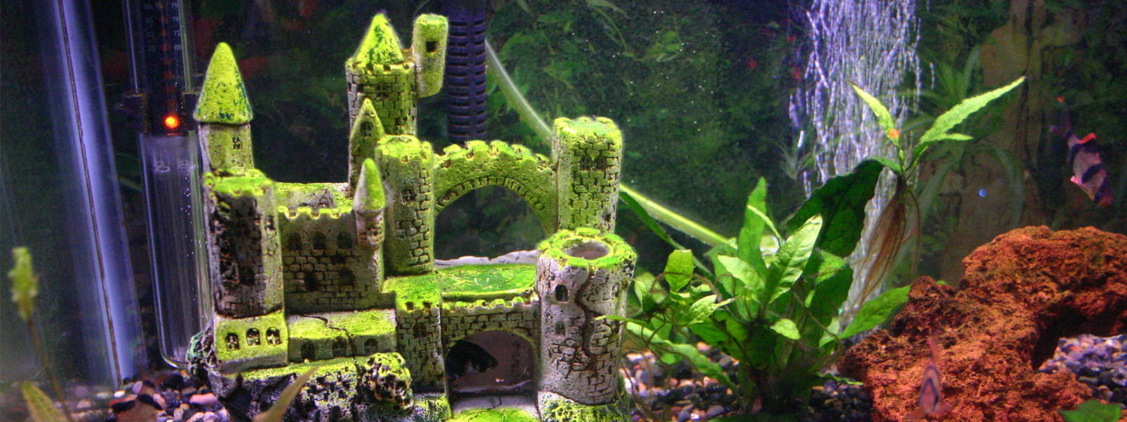 comment décorer son aquarium