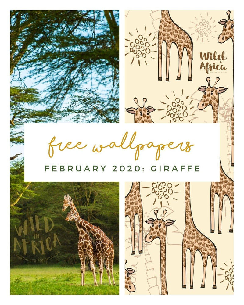 FREE FEBRUARY DOWNLOADS