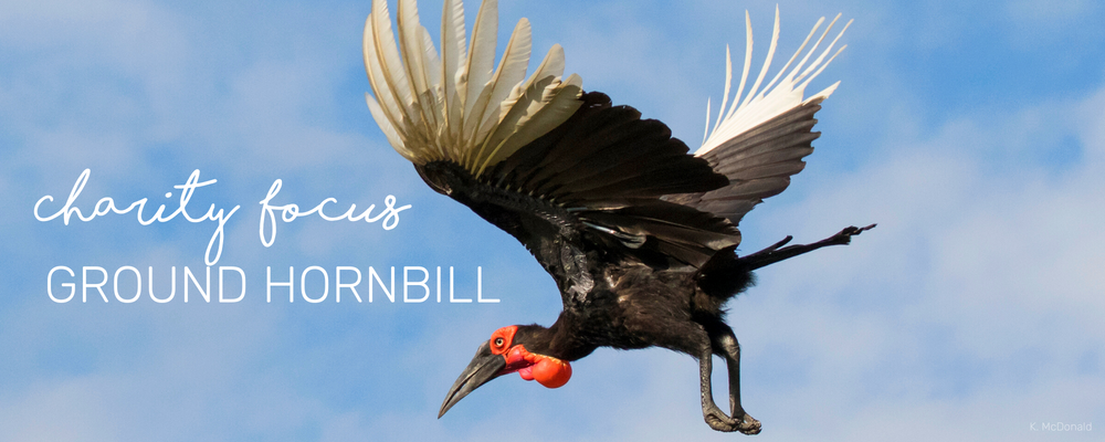 CHARITY SPOTLIGHT: GROUND HORNBILL