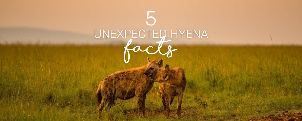 5 UNEXPECTED HYENA FACTS