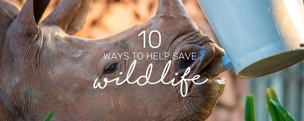 10 SIMPLE WAYS TO SAVE WILDLIFE