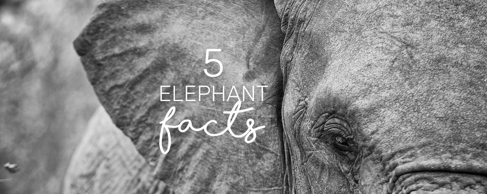 5 SURPRISING FACTS ABOUT ELEPHANTS