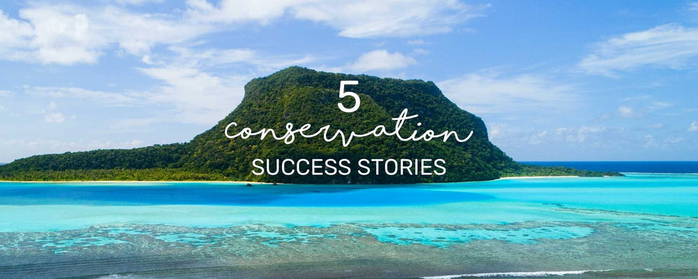 5 CONSERVATION SUCCESS STORIES