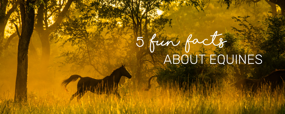5 FUN FACTS ABOUT EQUINES