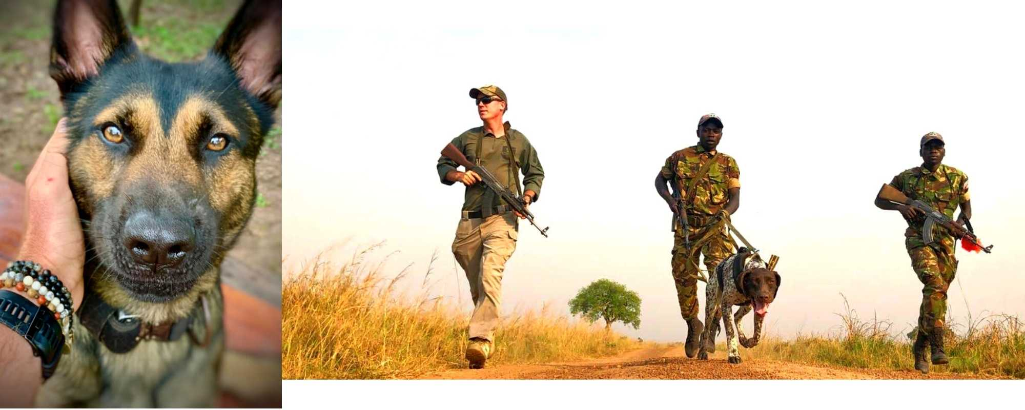 Training Dogs for Anti-Poaching in Africa - Wild In Africa®