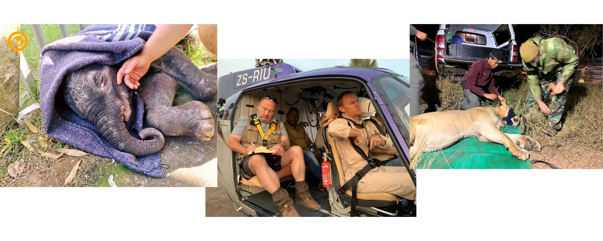 Saving The Survivors working on injured wildlife in South Africa - Wild In Africa