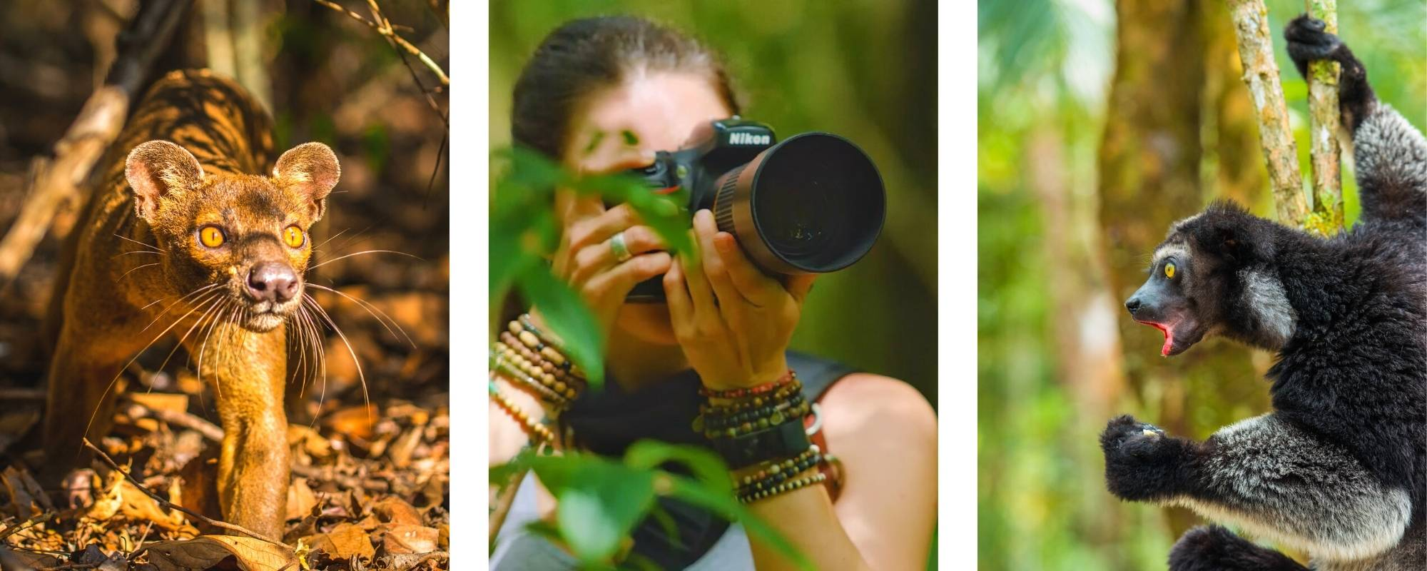 Fossa in Madagascar, Shannon Wild photographing in jungle, Indri in tree calling