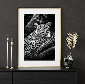 Load image into Gallery viewer, 16x24 print of an African Leopard by National Geographic photographer Shannon Wild