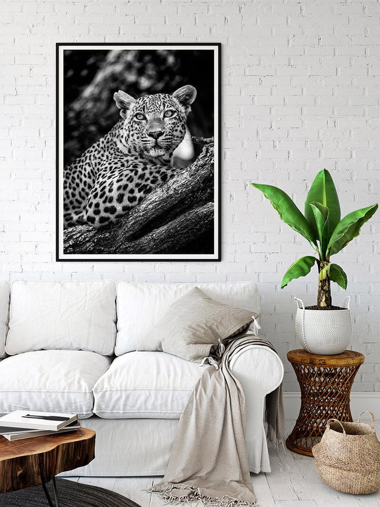Load image into Gallery viewer, 27x43 print of an African Leopard by National Geographic photographer Shannon Wild