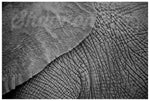 African Elephant Skin Photo Print - Wild In Africa