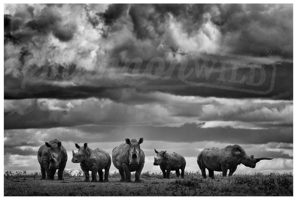 Load image into Gallery viewer, 'Crash' Rhino Photo Print - Wild In Africa