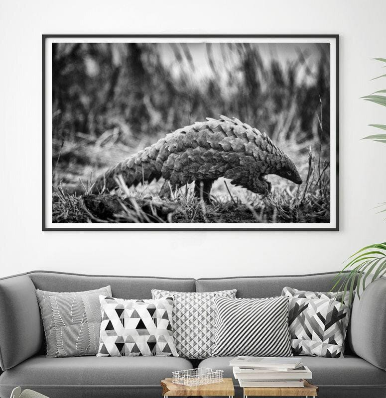 Load image into Gallery viewer, 'Pangolin' African Wildlife Print - Wild In Africa