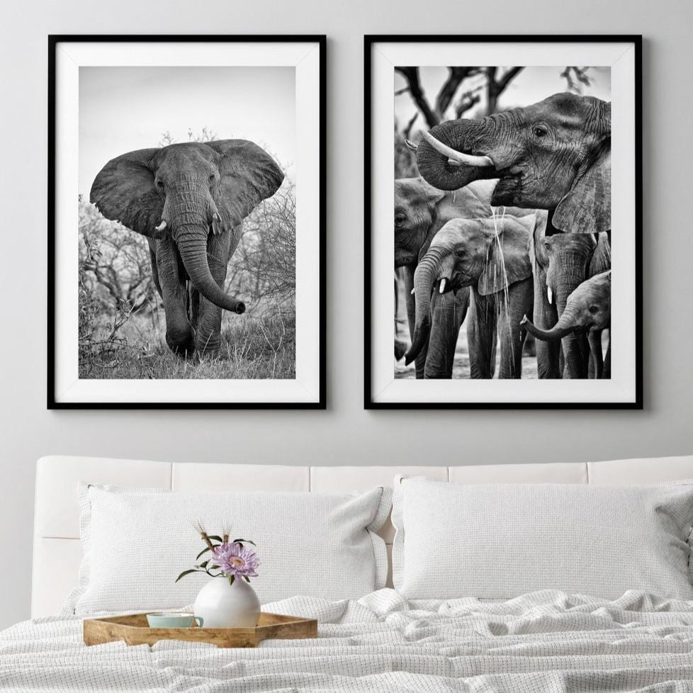 African Elephant Photo Print - Wild In Africa