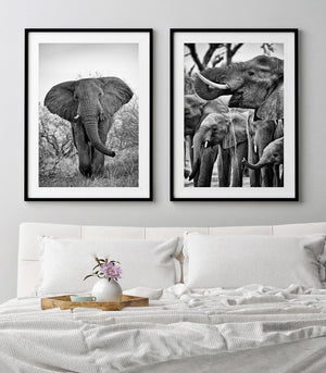 'Family Affair' Elephant Photo Print - Wild In Africa