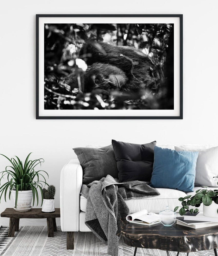 Load image into Gallery viewer, 'Shy Silverback' Fine Art Gorilla Print - Wild In Africa