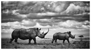'Take The Lead' Limited Edition Rhino Print - Wild In Africa