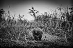 'Pangolin In Bush' African Wildlife Print - Wild In Africa
