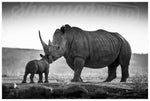 'The Kiss' Limited Edition Rhino Print - Wild In Africa