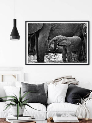 'Thirsty' Baby Elephant Photo Print - Wild In Africa