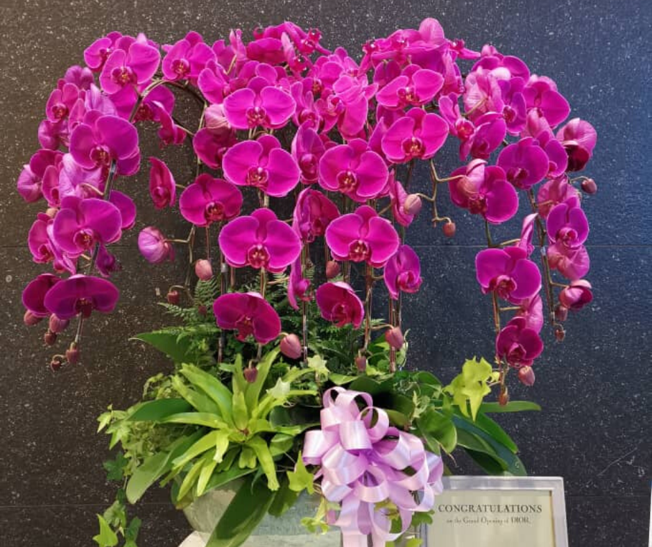 Phalaenopsis Grand Opening | Opening Flower Stand