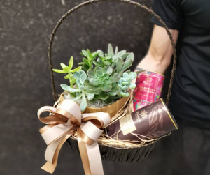 Succulent Set with Luxury Hot Chocolate & Instant Tea in Basket | Fresh Plant