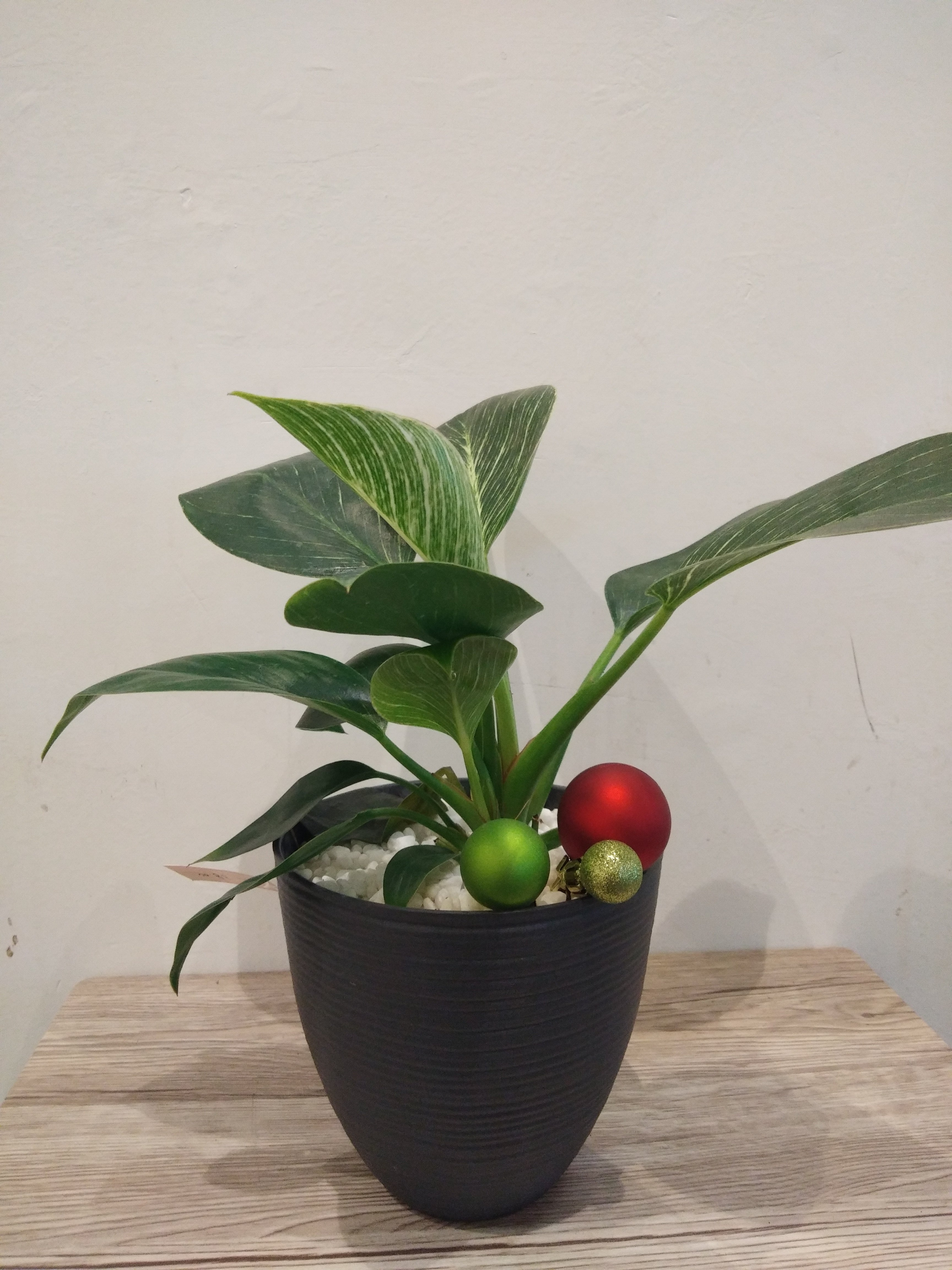 Christmas Plants 001 | Green Plants