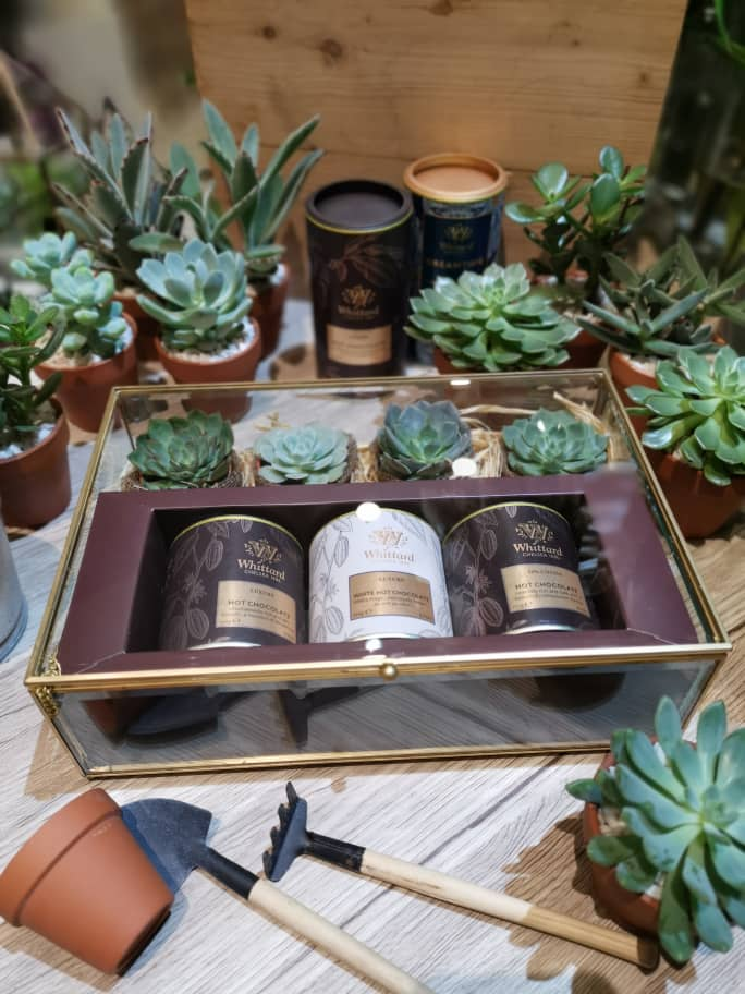 Hot Chocolate with Succulent in a Glass Box | Beverage