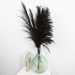 Mixed Pampas Black