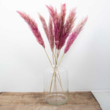 Load image into Gallery viewer, Pampas Grass Type 1 Pink Tye Dye