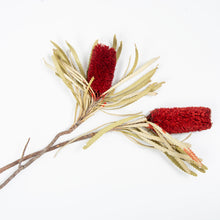 Load image into Gallery viewer, Banksia Attenuata Red- dried
