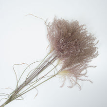 Load image into Gallery viewer, Fluffy Pampas Grass Reeds Mauve