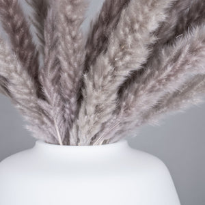 *NEW IN* Pampas Grass Fluffy mini- French Grey
