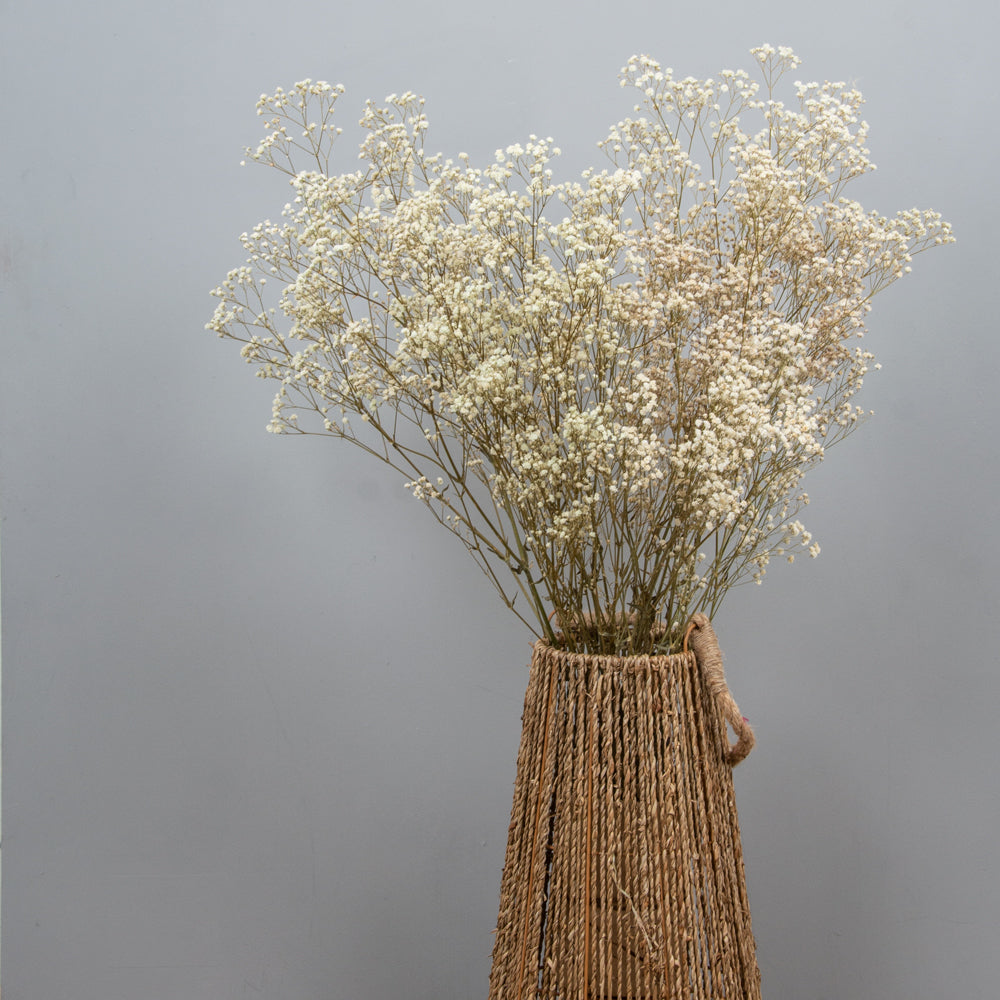 Gypsophila Natural Preserved Flowers