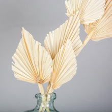 Load image into Gallery viewer, Palm Spears Cream Dried Flower Bunch x 5