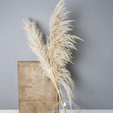 Load image into Gallery viewer, Pampas Grass Pair - one stem extra fluffy - one stem medium