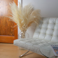 Load image into Gallery viewer, Pampas Grass Type 5 Cream