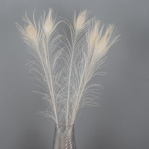 Peacock Feathers White
