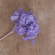 Load image into Gallery viewer, Preserved Hydrangea Lilac