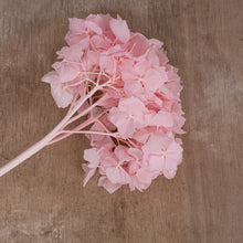 Load image into Gallery viewer, Preserved Hydrangea Pink