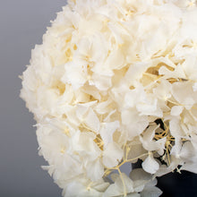 Load image into Gallery viewer, Preserved Hydrangea White