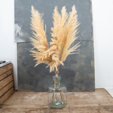 Load image into Gallery viewer, Pampas Grass Type 3 Golden