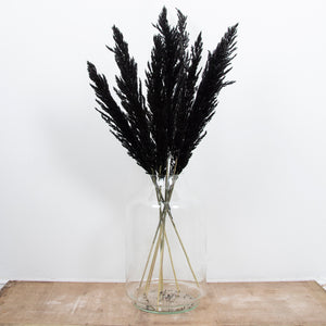 Pampas Grass Type 4 Black