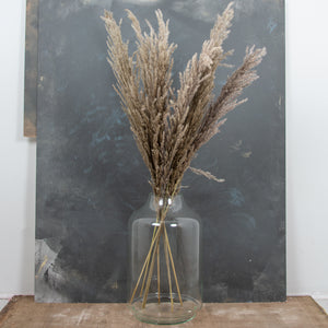 Pampas Grass Type 4 Natural