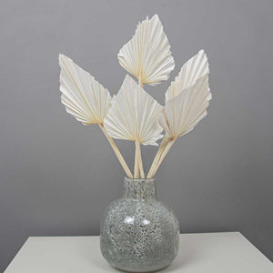 Palm Spears White Dried Flower Bunch x 5